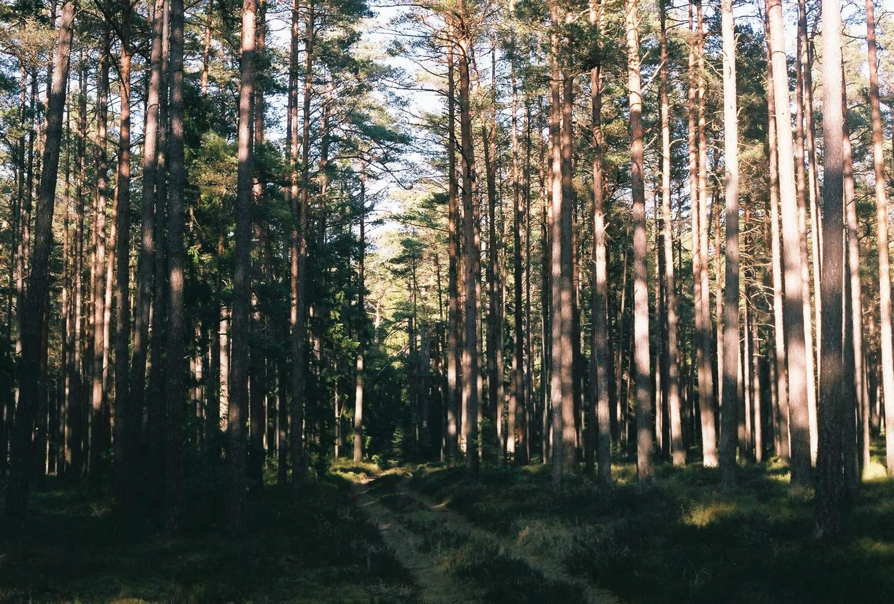 Sinine Äratus nõuab Eesti metsade raiemahu vähendamist